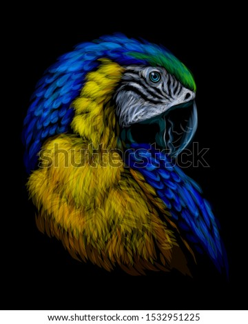 macaw parrot hand drawn