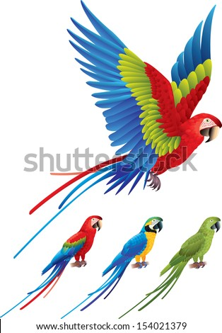 macaw parrot spread wings and