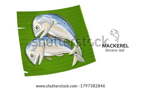 Mackerel fish fresh on banana leaf vector, popular food in thailand isolated on white background, illustration