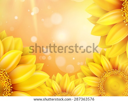 macro sunflower background with