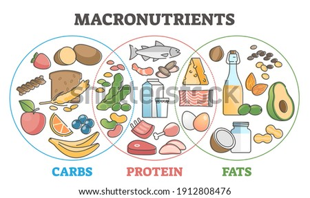 Macronutrients educational diet scheme with carbs, protein and fats outline concept. Food chart with product examples vector illustration. Dieting and healthy eating diagram with balanced ingredients.