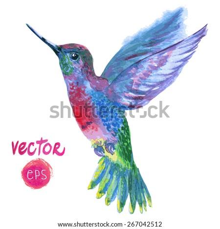 magic vector tropical bird