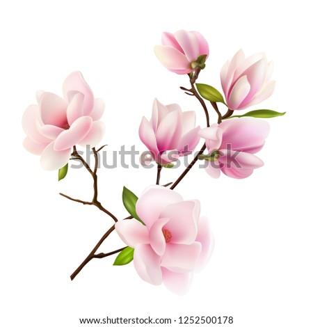 magnolia beautiful gentle