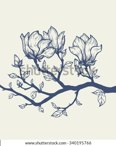 magnolia blossom tree branch