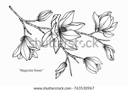 Magnolia flower drawing and sketch with black and white line-art. #763530967