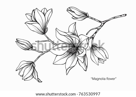 Flower sketch vectors download free vector art stock graphics magnolia flower drawing and sketch with black and white line art mightylinksfo