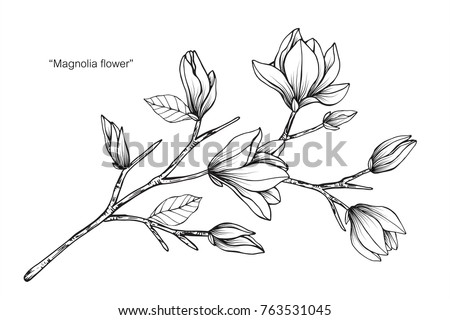 Magnolia Free Brushes 4 Free Downloads