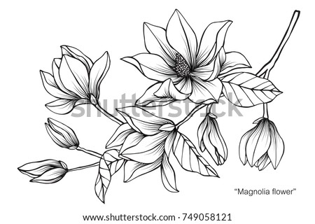Flower line drawing download free vector art stock graphics images magnolia flower drawing and sketch with black and white line art on white mightylinksfo