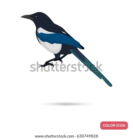magpie color flat icon for web