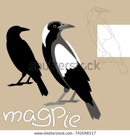magpie vector illustration