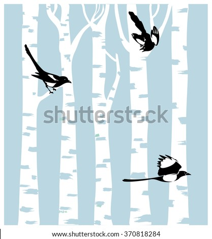 magpies on a birch trees