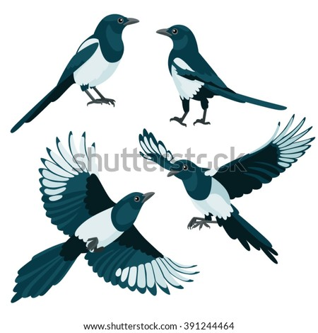 magpies on white background