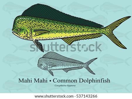 mahi mahi  common dolphinfish