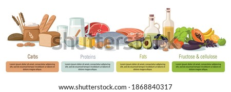 Main food groups - macronutrients. Carbohydrates, fats, proteins and fructose. Vector infographic illustration