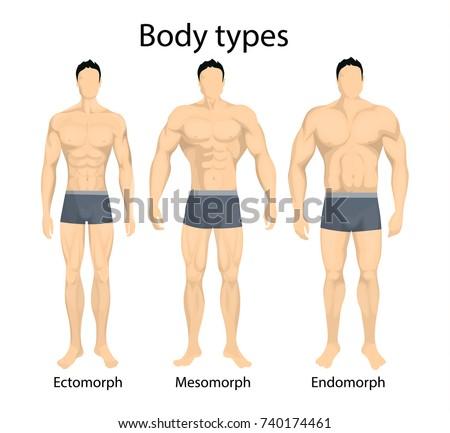 Male body types. Ectomorph, mesomorph and endomorph types