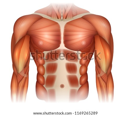 Male diastasis Recti also known as Diastasis Rectus Abdominus or abdominal separation, there is a gap between muscles Stock photo ©