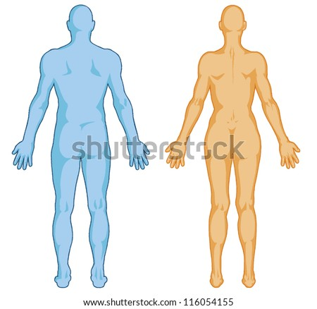 Male, female body shapes � human body outline � vector - posterior view - full body