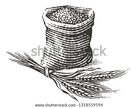 Malt in burlap bag with bunch of dry ears. Hand drawn engraving style illustrations.