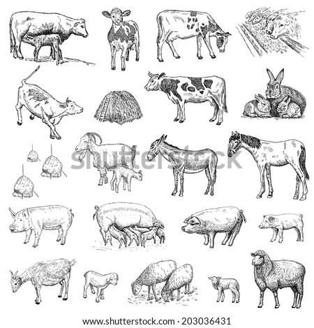 mammals. hand drawing set of vector sketches