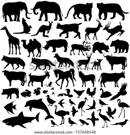mammals,vector illustration