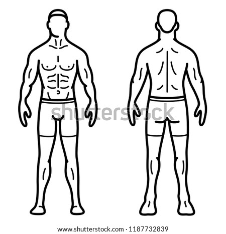 Royalty Free Anatomy Of Male Muscular System 271595603 Stock