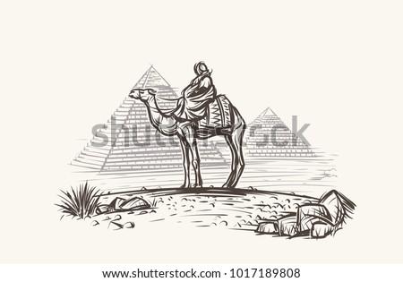 Man on Camel in desert near Pyramids illustration. Vector.