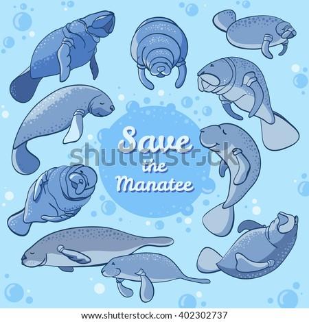 manatees swimming in the ocean