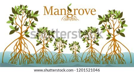 Mangrove forest background. Mangrove logo. EPS10