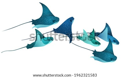 Manta ray fishes, marine animals, sea creatures set vector illustration. Blue turquoise eagle ray fishes, manta ray scuba vector. Eagle or devil fish group, underwater stingray giant ocean animals. Foto stock ©