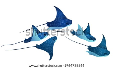 Manta ray fishes, marine animals, sea creatures set vector illustration. Blue turquoise eagle ray fishes, manta ray scuba vector. Eagle or devil fish group, underwater stingray giant ocean animals.