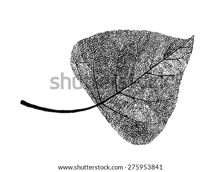 manually drawn poplar leaf