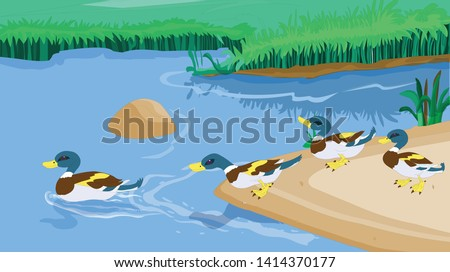 many ducks roam in the lake and