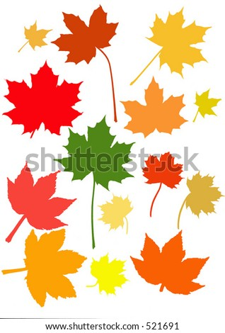 Many maple leaves in their brilliant fall/autumn colors