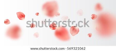 many tender pink petals