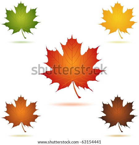 Mapel leaf icon vector