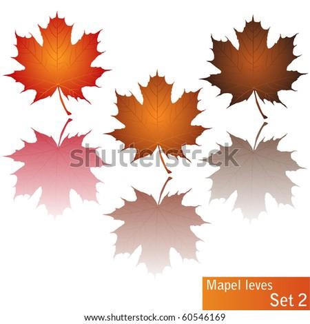 mapel tree leaves set 2 vector