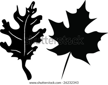 Maple Leaf vs Oak Leaf Maple And Oak Leaf Silhouettes