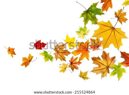 maple autumn falling leaves