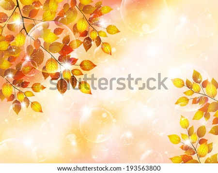 maple foliage landscape