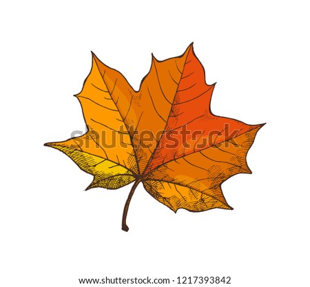 Maple leaf, autumn season and period, icon vector. Star shaped foliage and frondage, natural object falling from tree and became dry, defoliation
