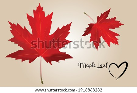 maple leaf in red vector