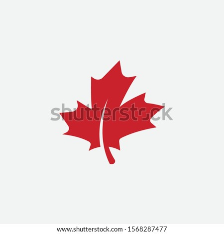 maple leaf logo template vector