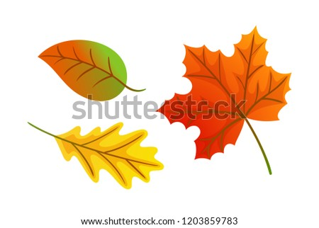 Maple leaves autumnal symbols isolated icons set vector. Defoliation in October and November, frondage fall signs. Seasonal natural symbolic items