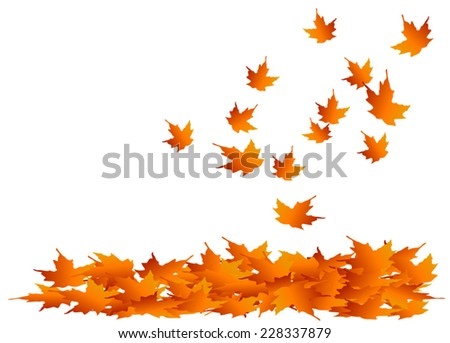 maple leaves falling into a