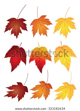 maple leaves in changing fall
