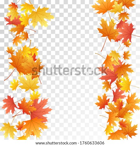 maple leaves vector  autumn