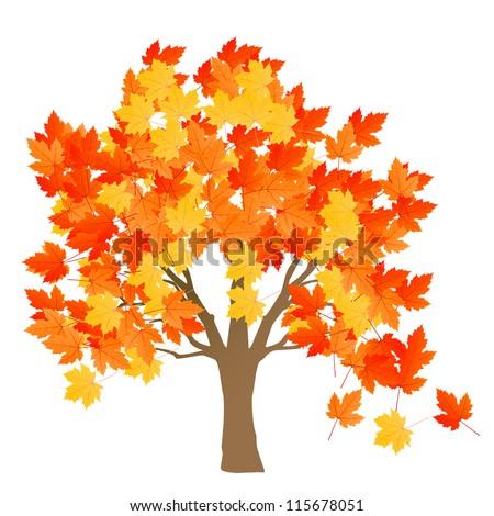 maple tree autumn leaves
