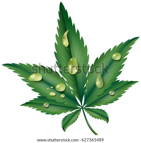 marijuana leaf with resin