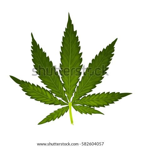 marijuana or cannabis vector
