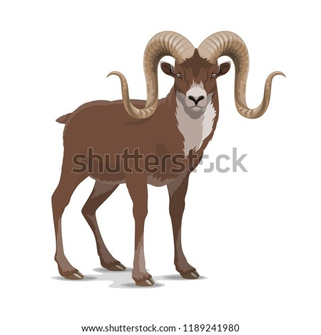 Markhor or screw horn wild vector goat. Flare astore markhor with corkscrewing horns wildlife domesticated animal living in mountains, realistic feral goat rare horned mammal